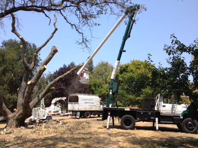 What A Tree Service Company Can Do For You